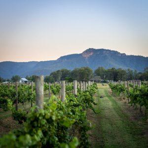 Broke Estate Vineyard
